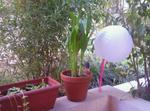 Appartement Avec Jardin Et Terrasse - 10 Km Plages