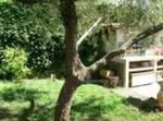 3 Bedrooms House In Countryside Of Rome, Italy