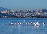 Relax In Sardegna : Sole E Mare..