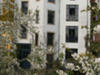 City-appartment In Dresden-neustadt With Garden