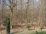 Calm Flat In The Forest Twenty Min From Frankfurt
