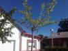 Casa Con Jardín En Tremp, Prepirineo Catalán