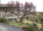 Small 2br Sunny Cottage In Forest Near Beach