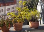 Helle 2-zimmer-wohnung In Ruhiger Lage Berlin