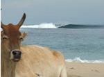 Gold Coast / Beaches / Mountains / Australia